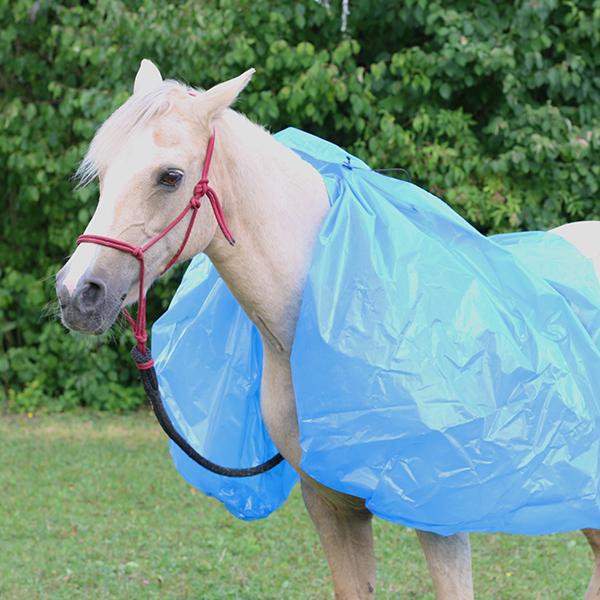 Pony Yvonne bei der Vertrauensarbeit