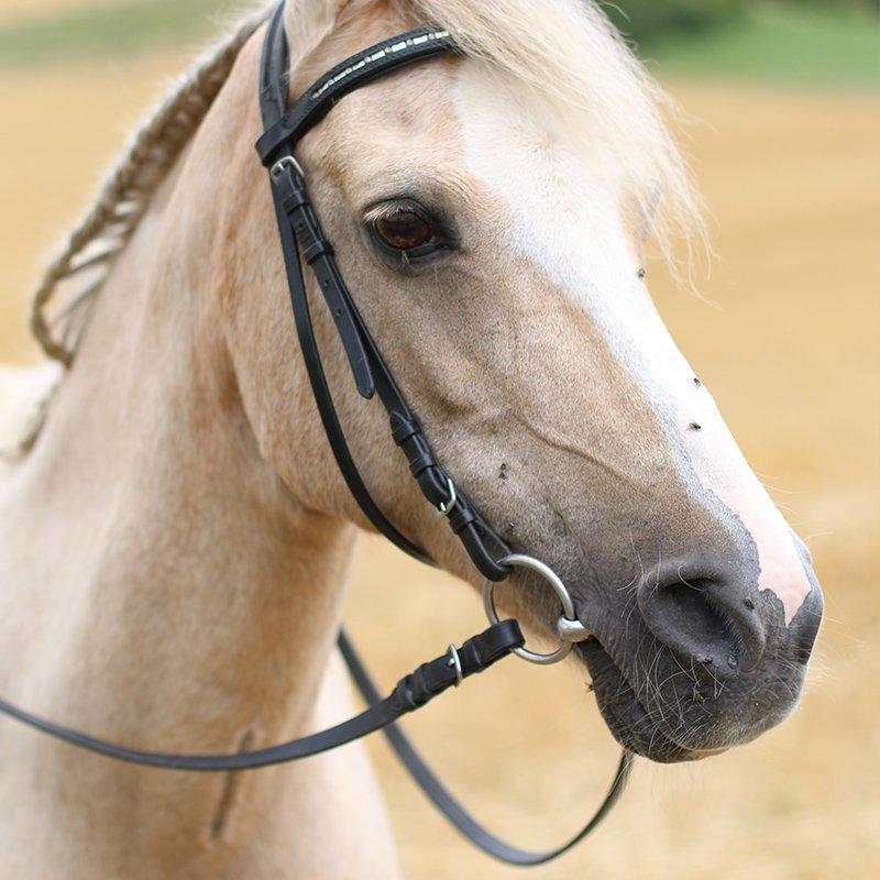 Pony Yvonne